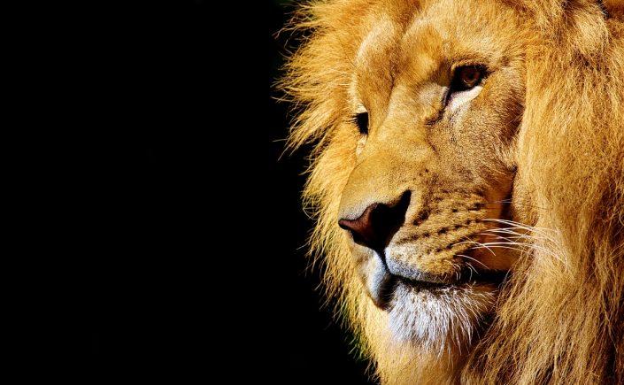aurinkoinen leijona XXX Video- lesbot pillua hieroen videoita